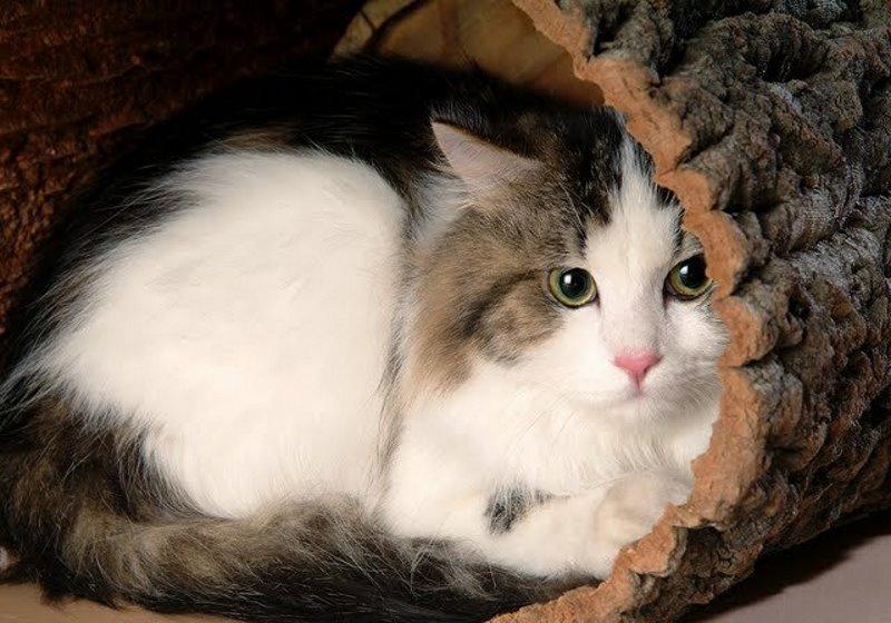 Кошка прячется в темные места  почему и что делать