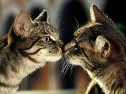 zrelé mačička dámy